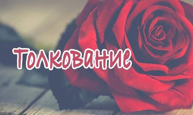 Роза на столе
